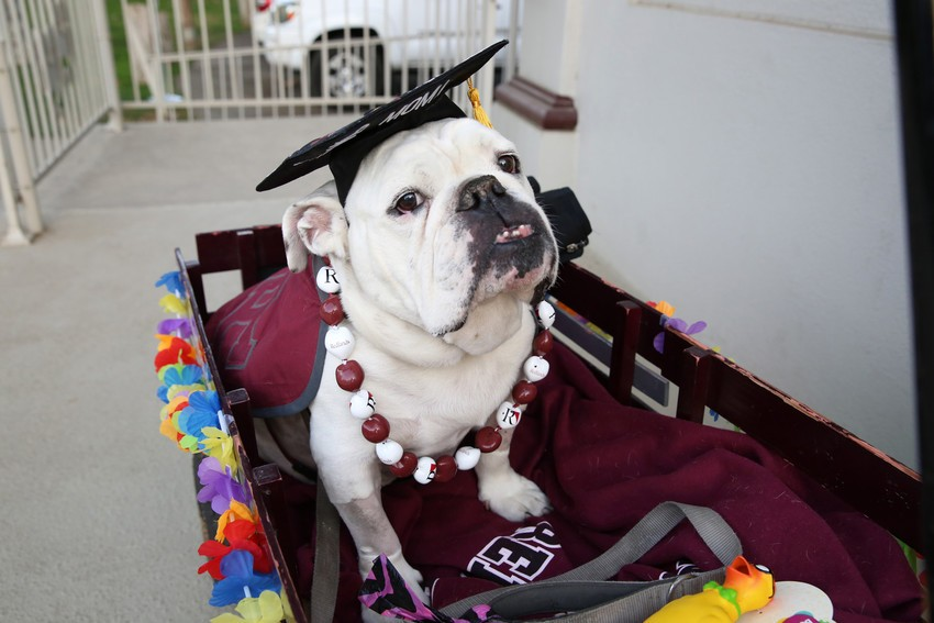 Graduating Thurber: A Bulldog for Life and Best Friend to All